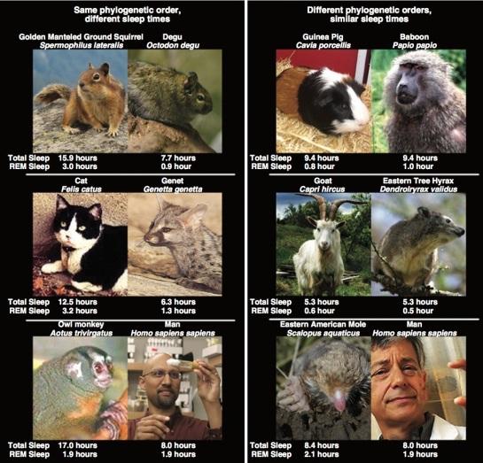 diferentes sueños y fases REM según animales y humanos.jpg