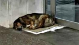 Canelo, el perro gaditano que esperó 12 años a su dueño en elhospital
